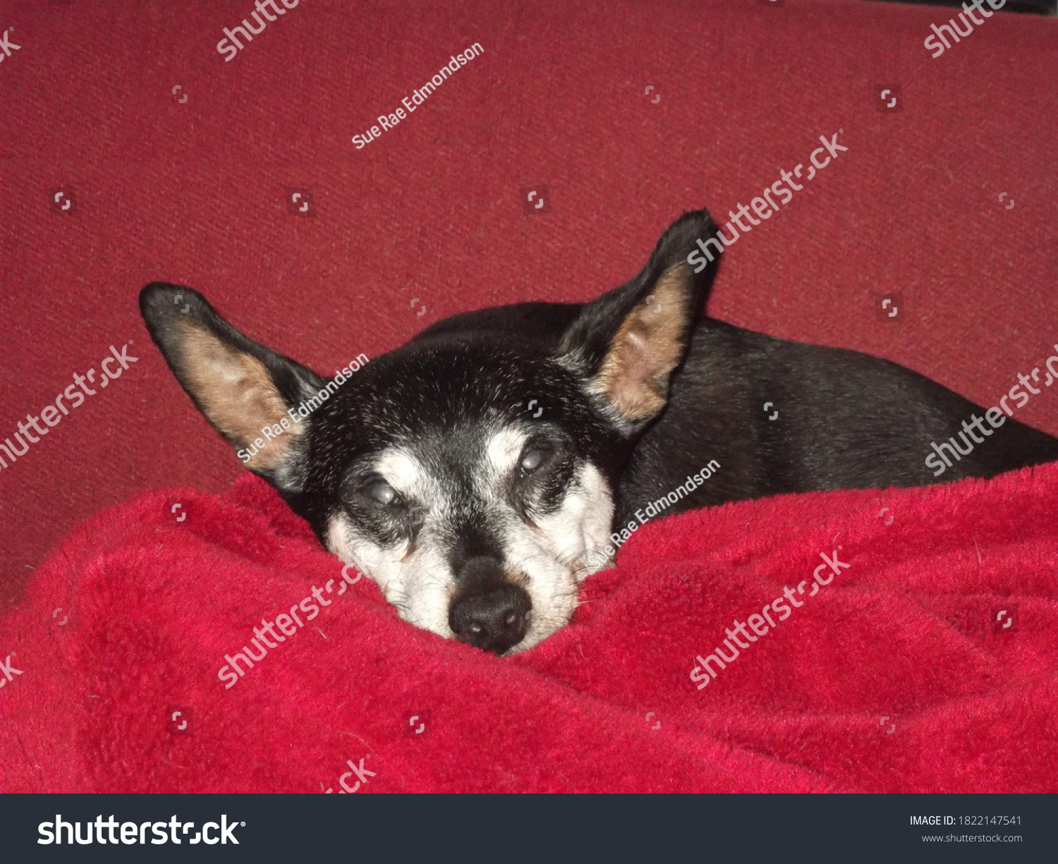 stock-photo-close-up-of-an-old-dog-with-