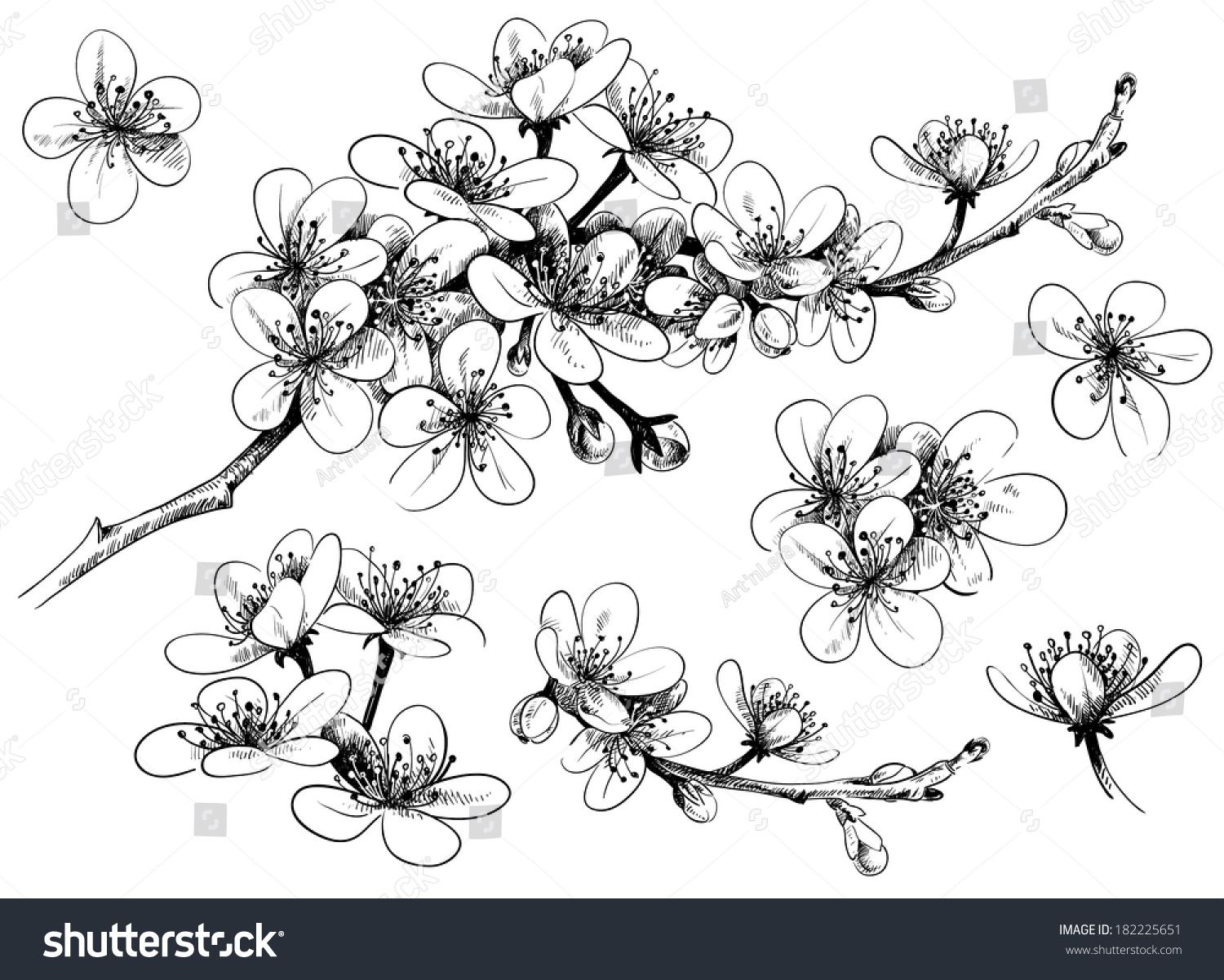 HD wallpapers spring blossoms coloring pages