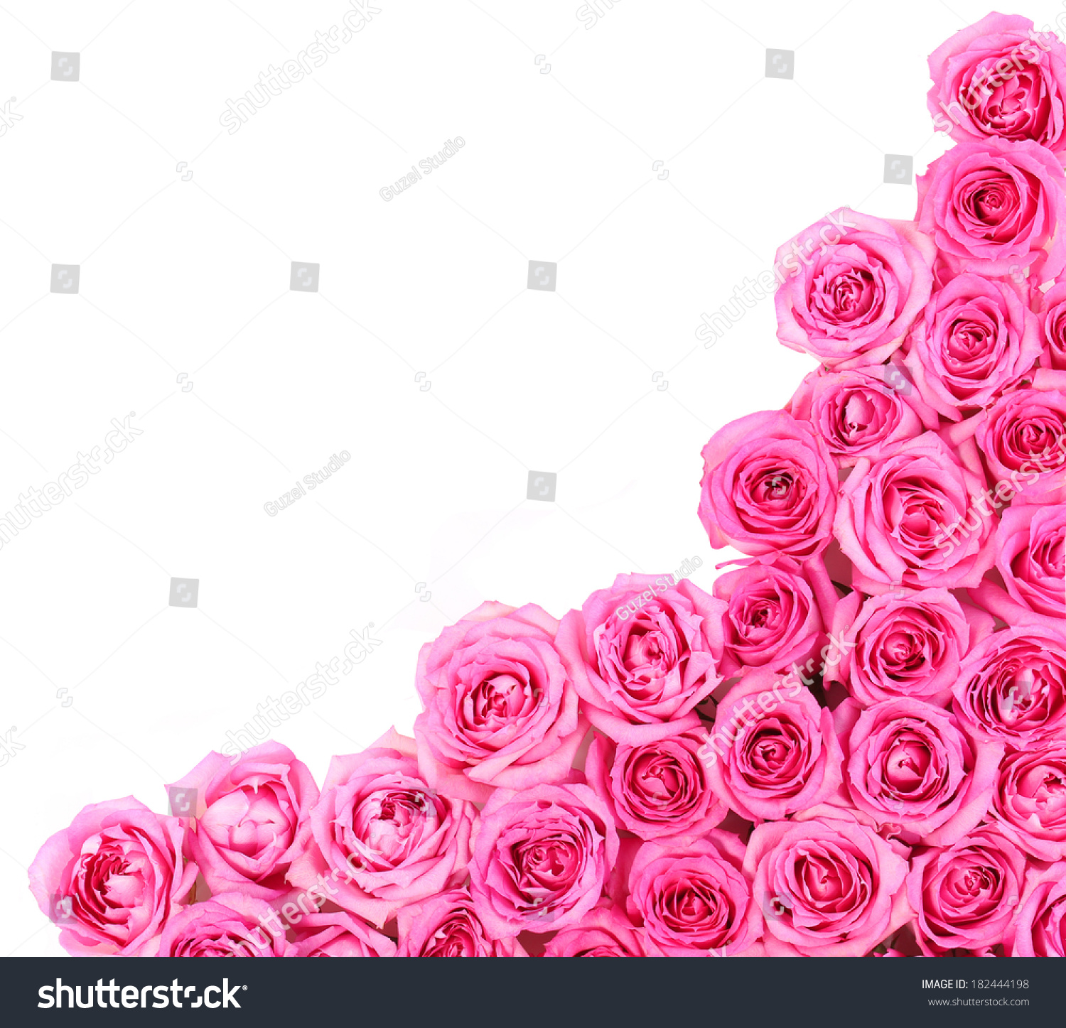 Hot Pink Roses Over White Background Stock Photo Edit Now
