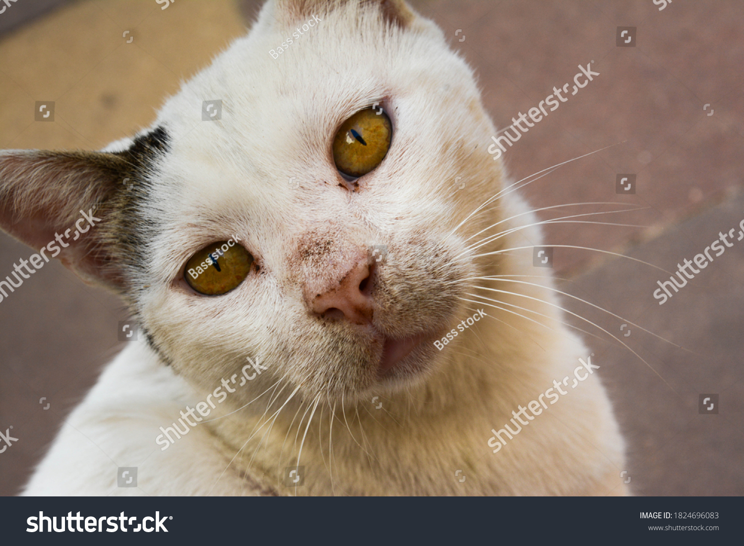 stock-photo-portrait-of-old-feral-cat-lo