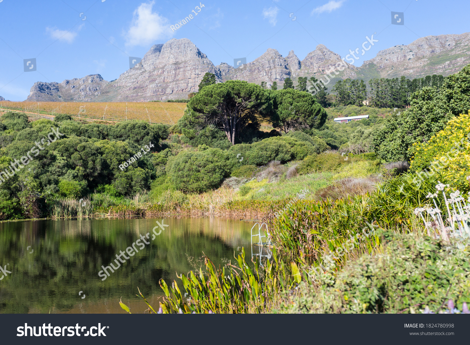 landscape view of a lake and lush vegetation against a backdrop of mountains at a wine estate in Stellenbosch, Cape Winelands, South Africa