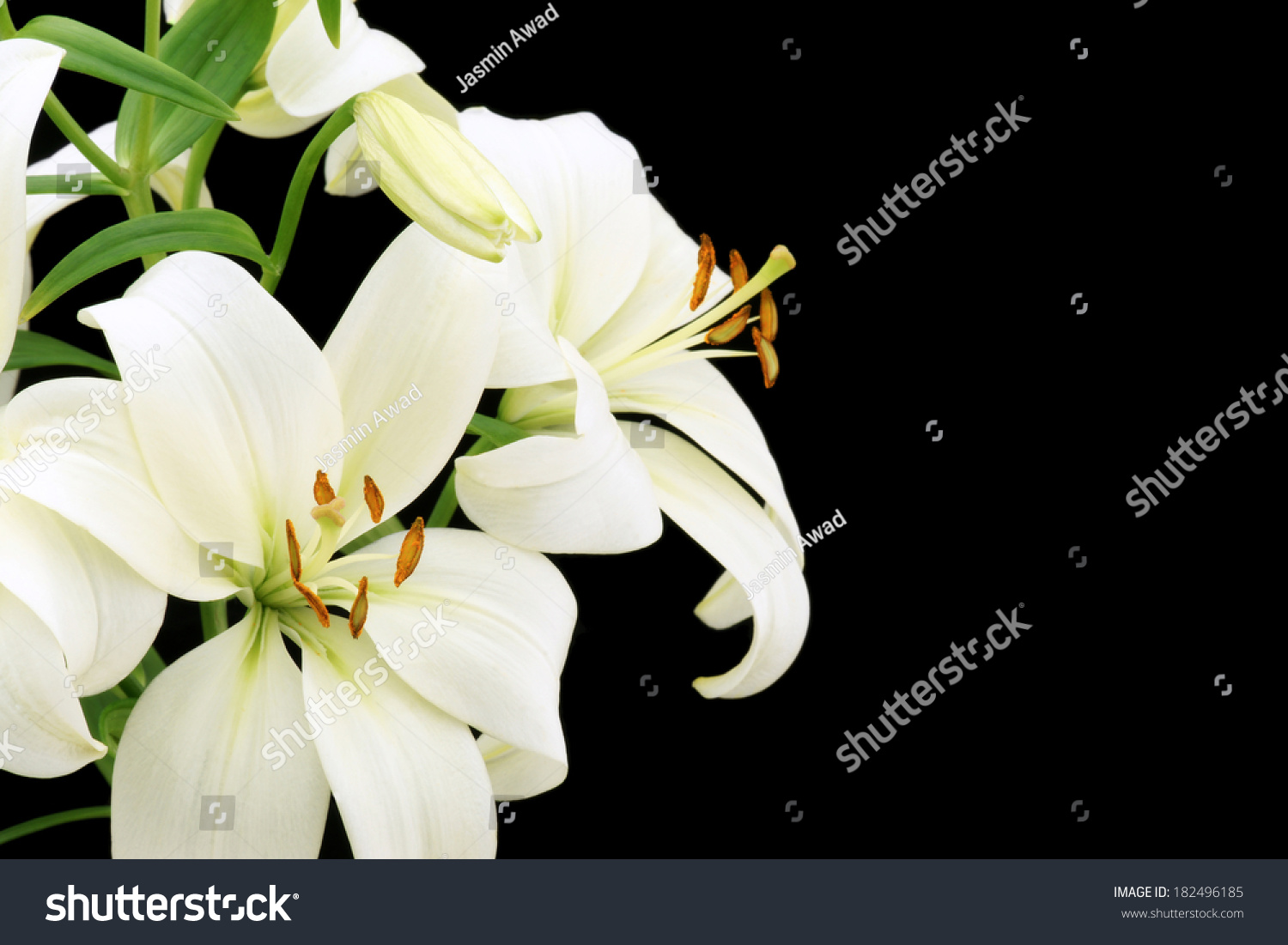 Beautiful lily flower on black background stock photo edit now beautiful lily flower on black background with copy space izmirmasajfo