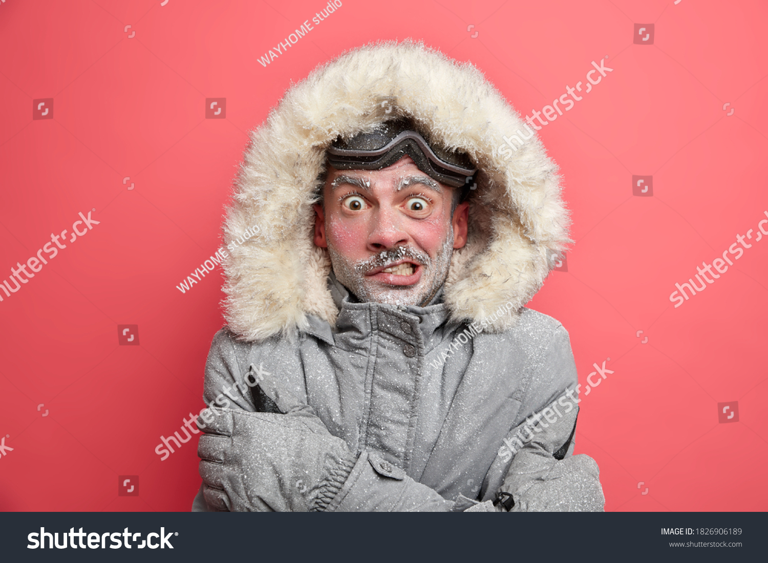 Frozen man trembles from cold has red face covered by ice frosted beard wears jacket with hood needs to warm during winter expedition poses over coral background. Cold weather low temperature #1826906189
