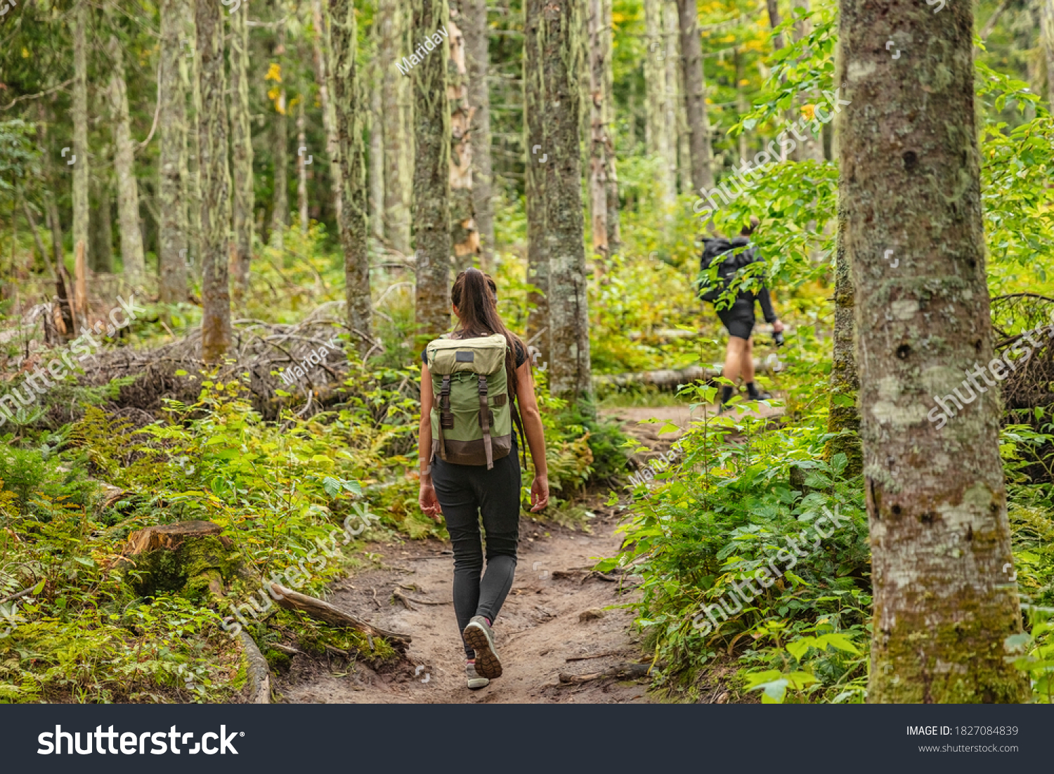 Hike trail hiker woman walking in autumn fall nature woods during fall season. Hiking active people tourists wearing backpacks outdoors trekking in pine forest. #1827084839