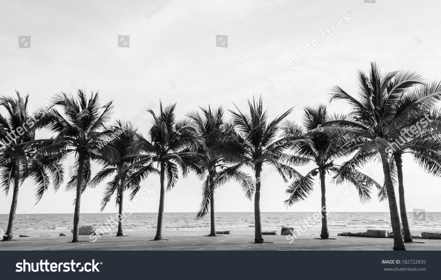Black & White view of Beautiful beach with palms, Thailand #182722835