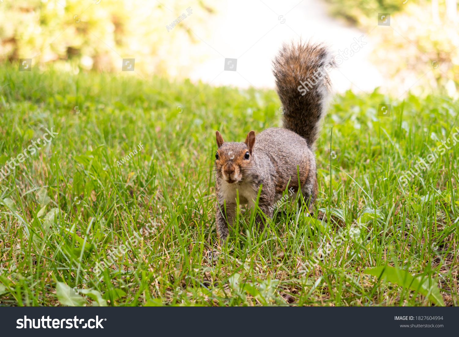 stock-photo-view-of-an-adorable-eastern-