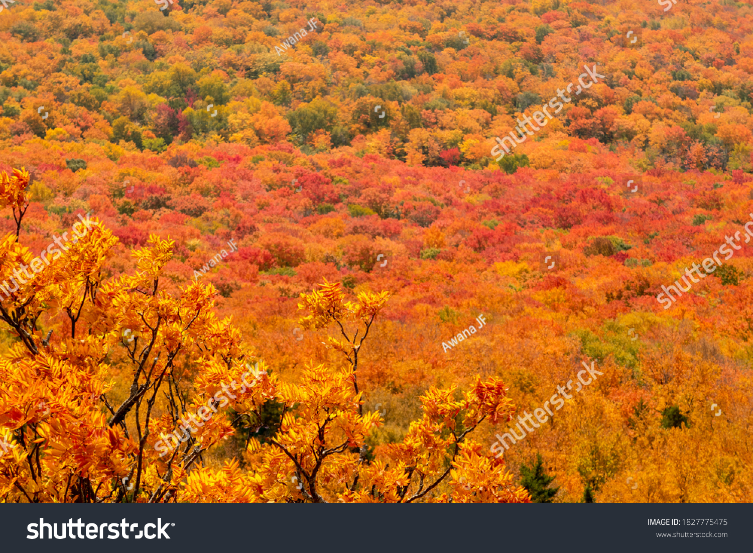 stock-photo-beautiful-autumnal-colors-in