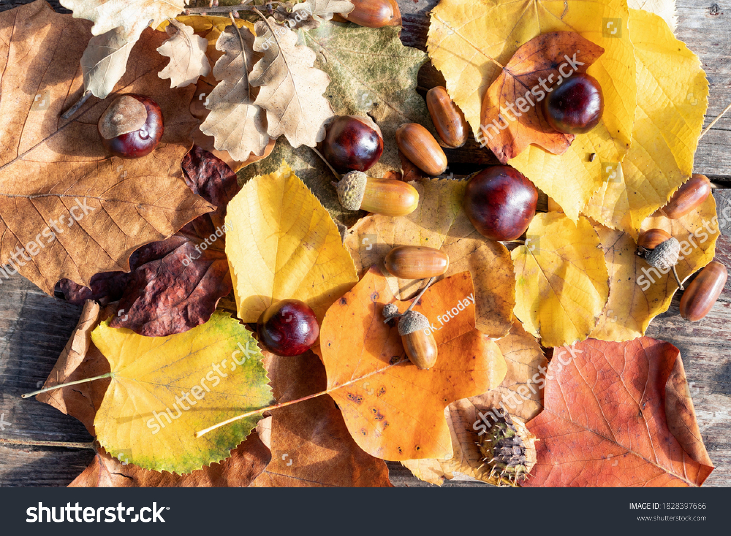 Autumn background: dry yellowed leaves of different trees and fruits of oak and horse chestnut, top view