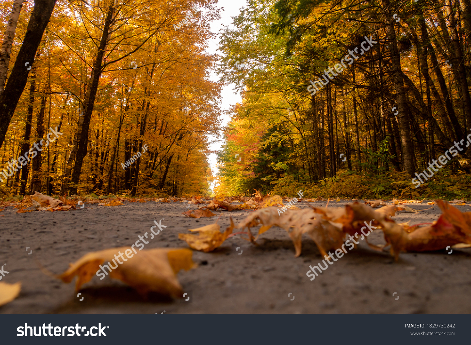stock-photo-autumnal-view-of-fallen-leav