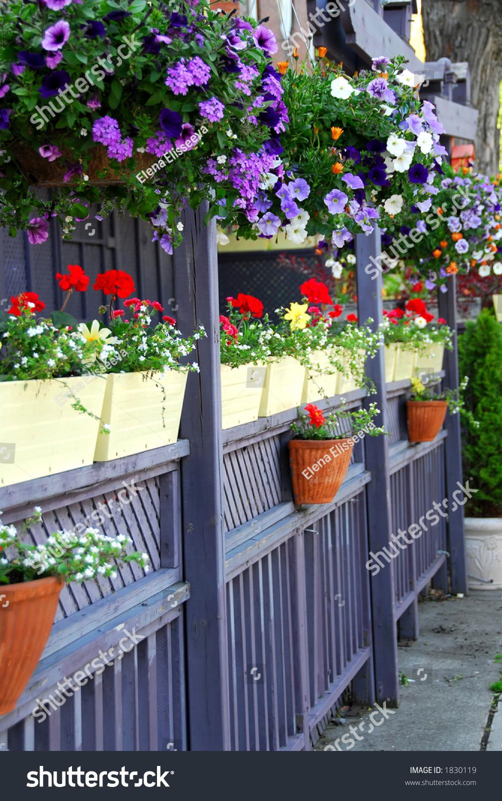 Фото цветов на заборах
