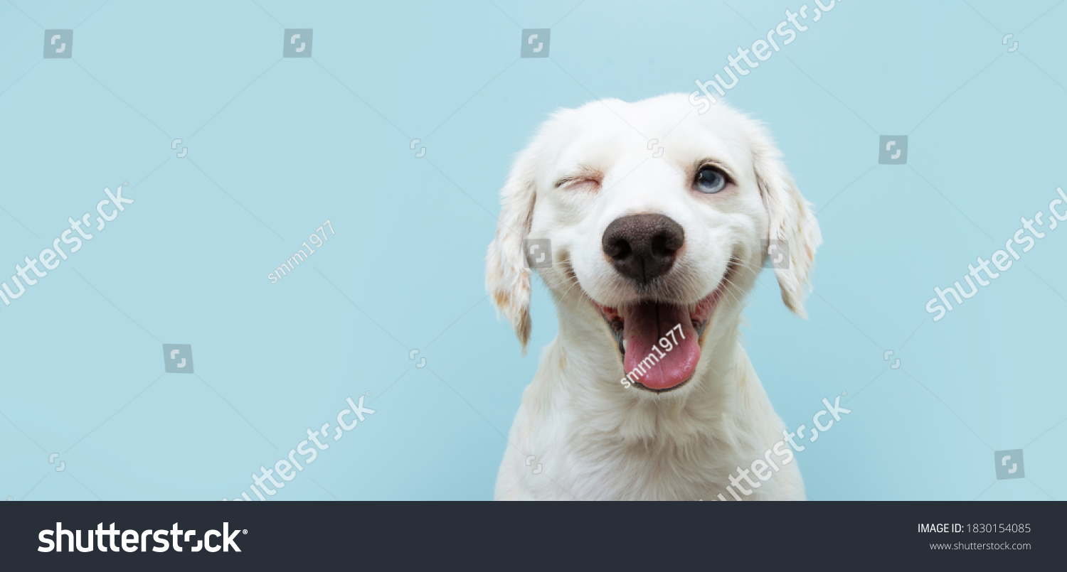 Happy dog puppy winking an eye and smiling  on colored blue backgorund with closed eyes. #1830154085