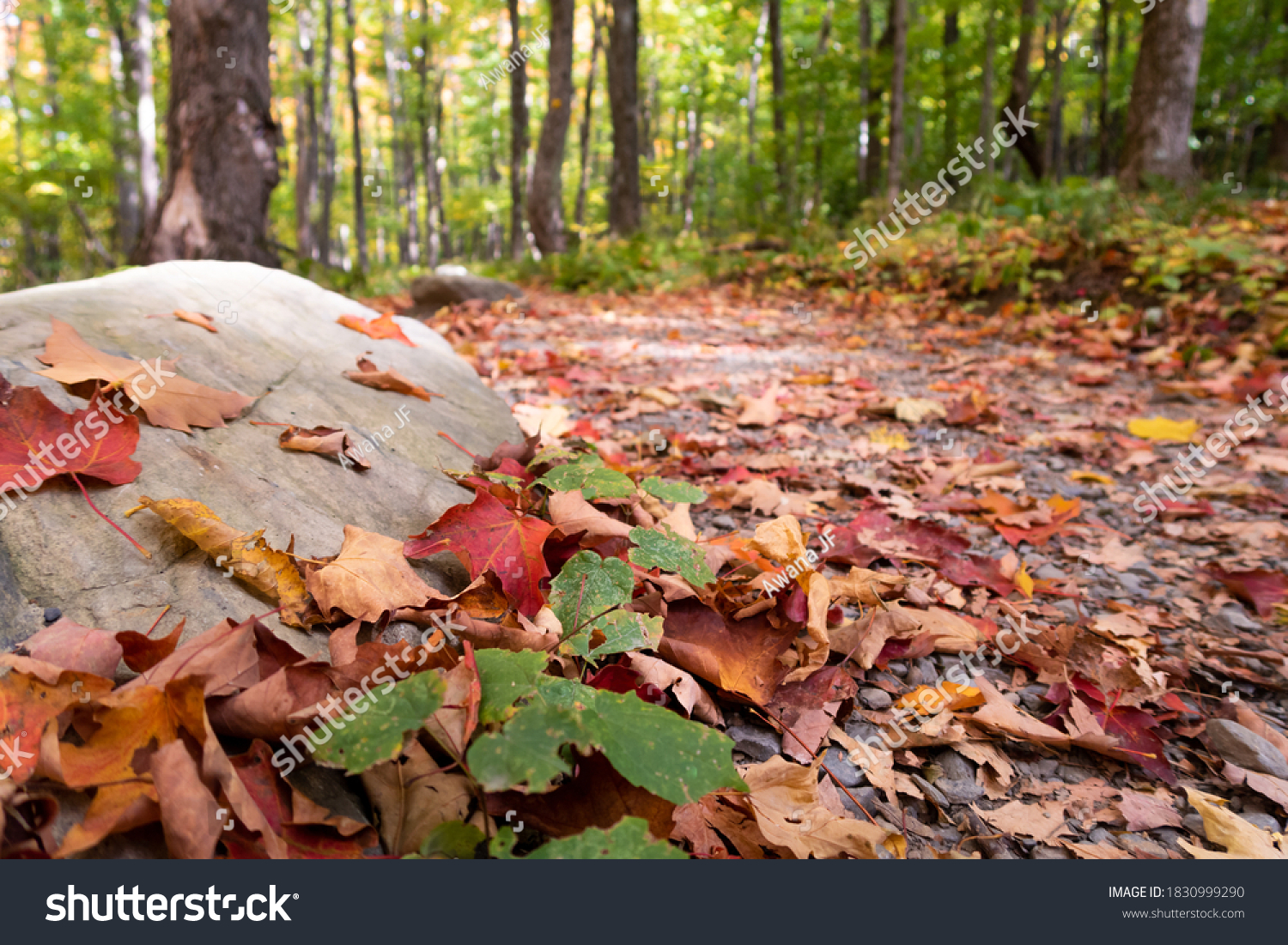 stock-photo-view-of-fallen-leaves-on-the