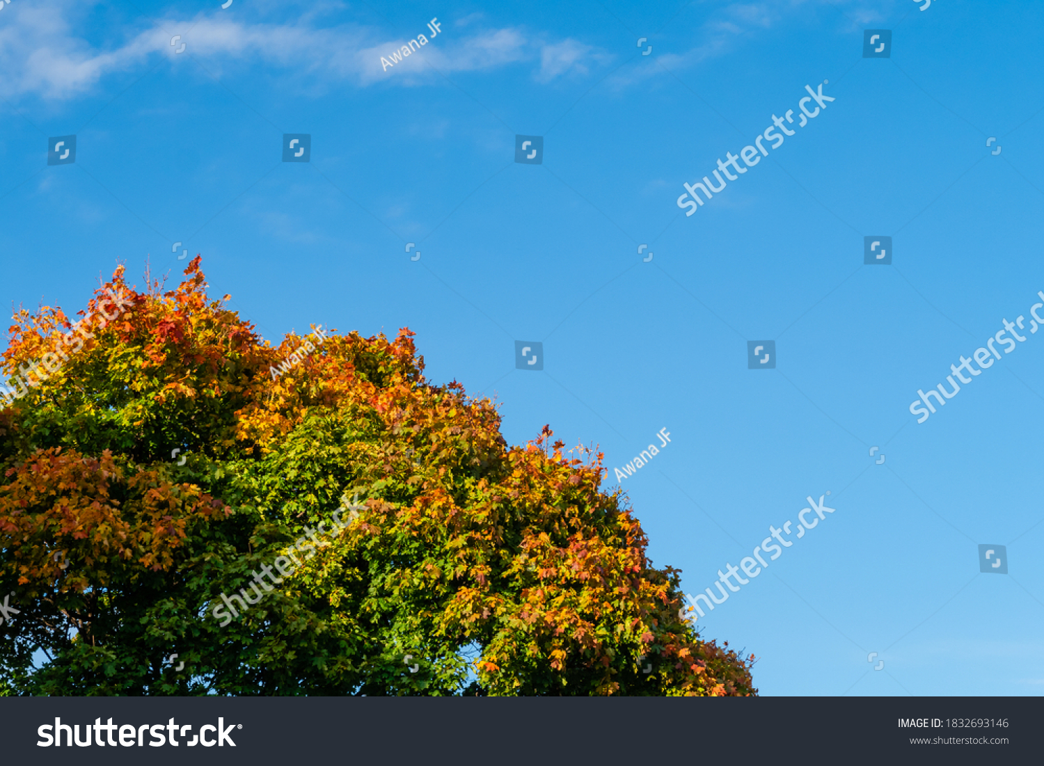 stock-photo-autumnal-view-of-a-tree-top-