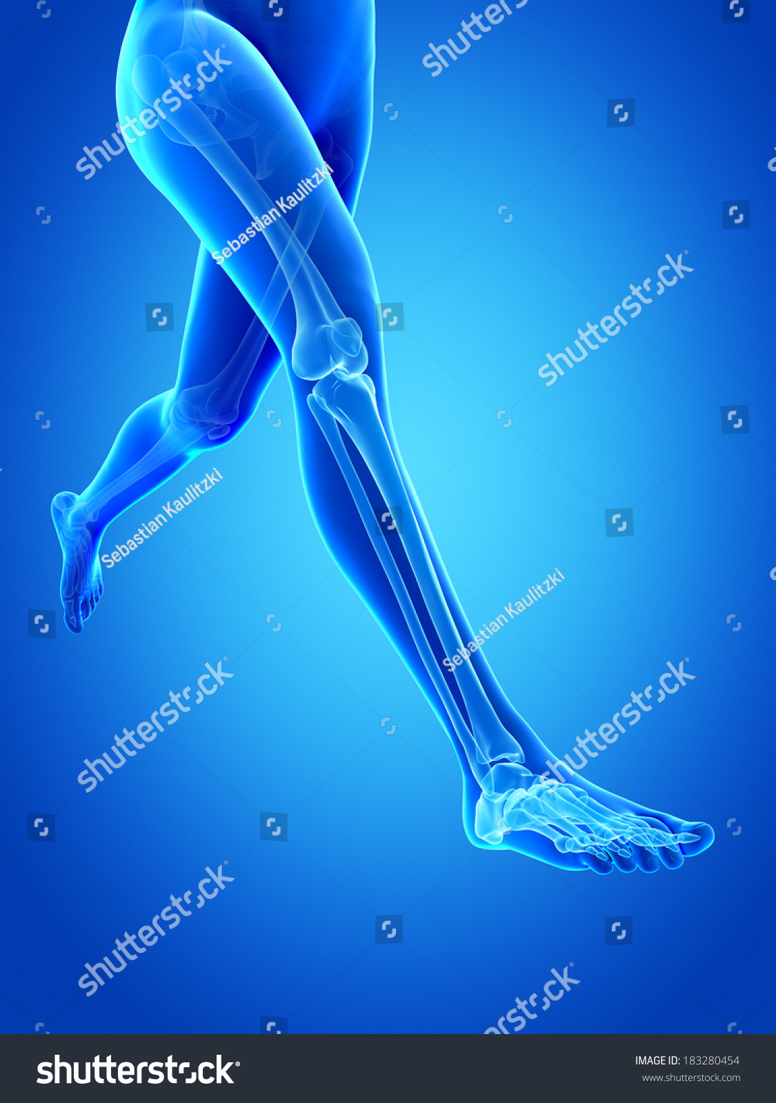 Woman Running Visible Anatomy Leg Bones Stock Illustration 183280454