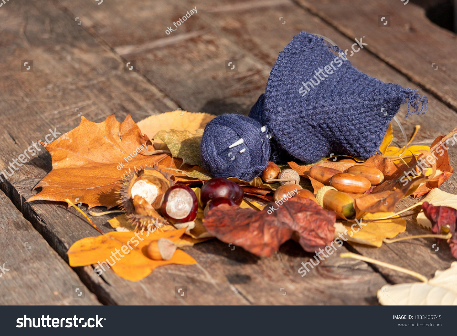 Autumn plot: a ball of dark blue threads and a started knitted product on knitting needles against a background of ripe acorns with oak and linden leaves on a wooden board