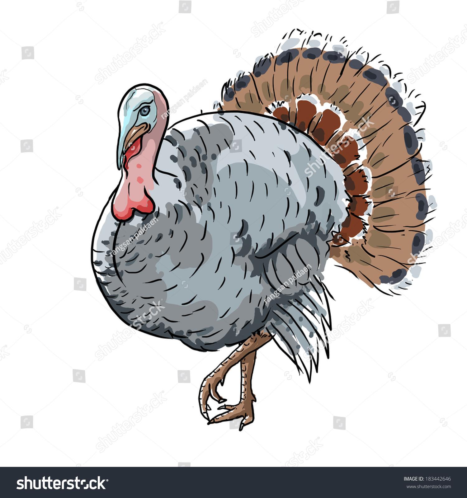 Hand drawn vector turkey | EZ Canvas