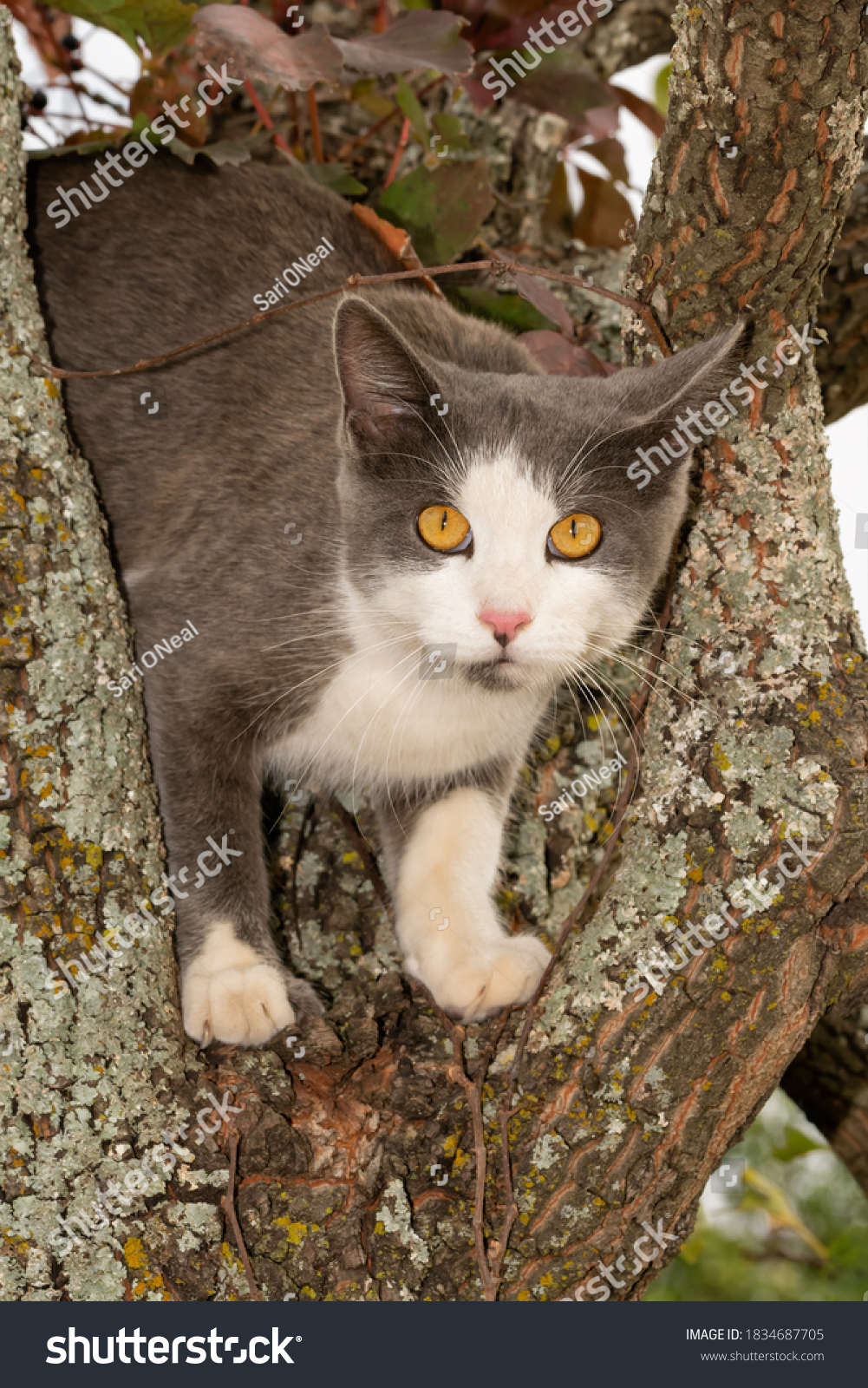 stock-photo-blue-and-white-spotted-cat-u