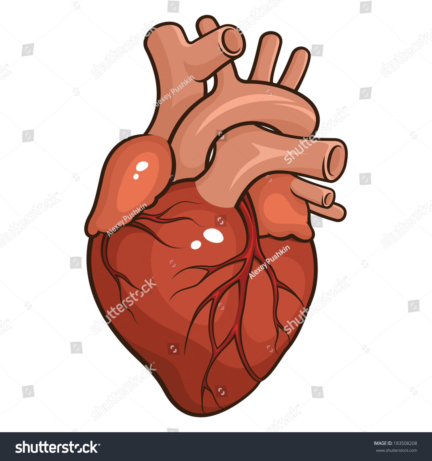 Vector Illustration Human Heart Isolated On Stock Vector Royalty