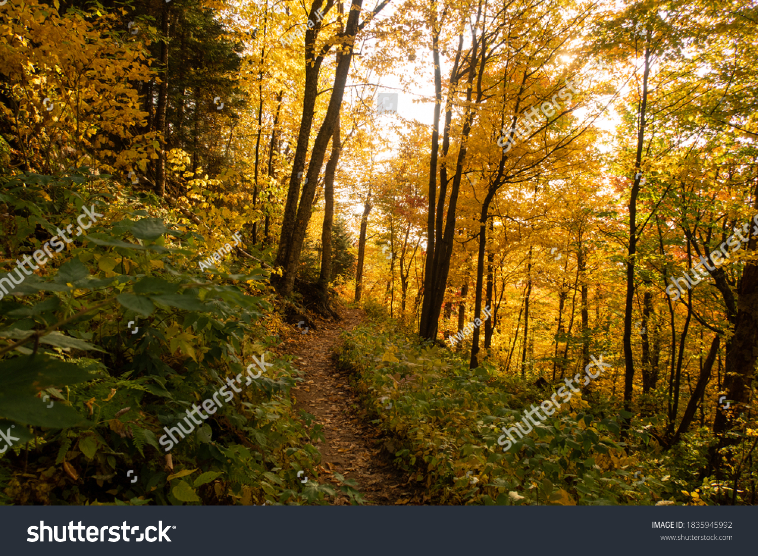 stock-photo-autumnal-view-of-a-forest-tr