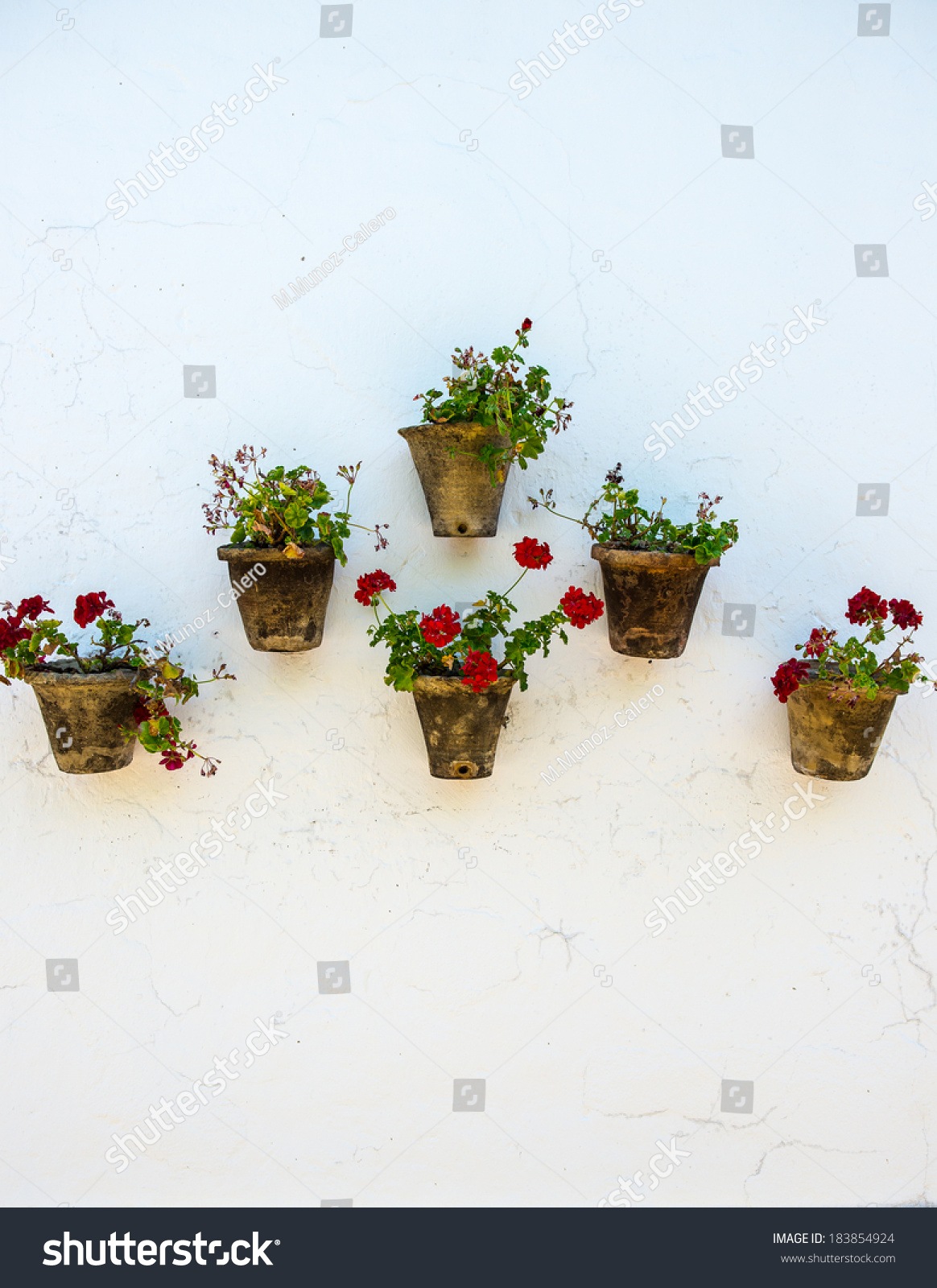 Spanish rustic plant pots on a white rustic wall & Spanish Rustic Plant Pots On White Stock Photo (Edit Now) 183854924 ...