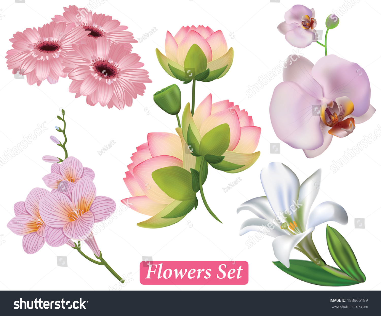 Set pink flowers on white background stock vector 183965189 set of pink flowers on a white background vector lotus gerbera freesia dhlflorist Image collections