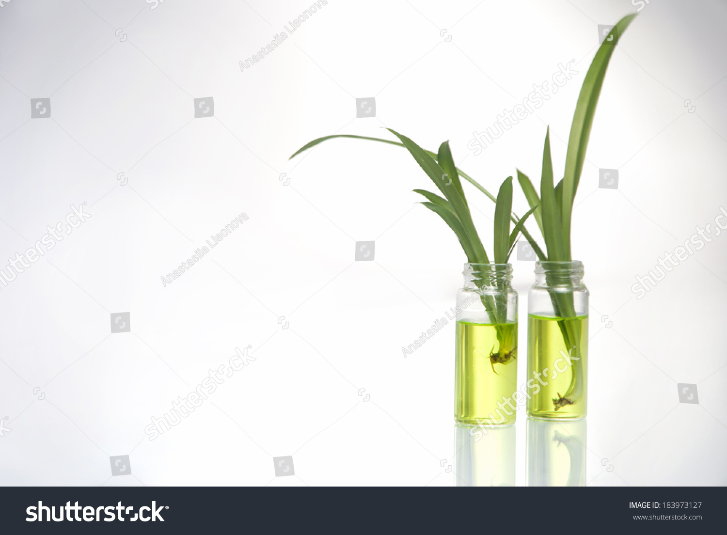 fast plants lab background Catalase enzyme lab background information  liver and other living tissues contain the enzyme catalase this enzyme breaks down hydrogen peroxide, which is a harmful by-product of the process of cellular respiration if it builds up in concentration in the cells.