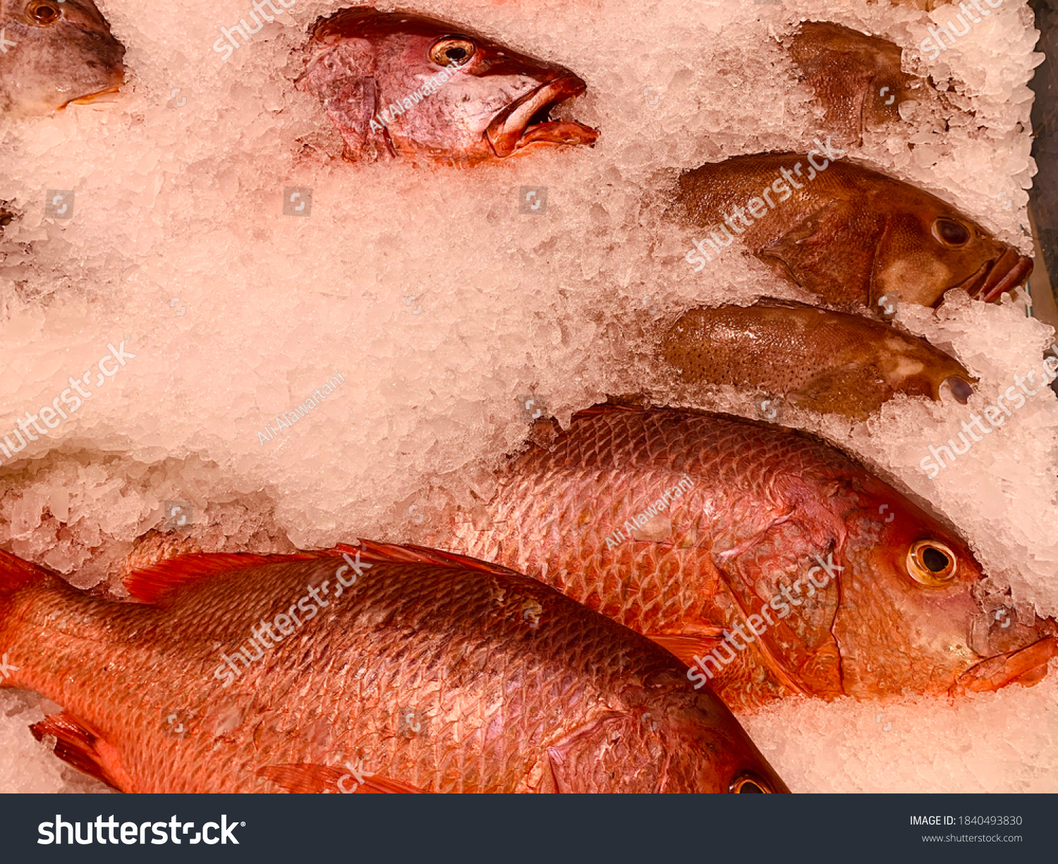 stock-photo-close-up-to-fresh-fish-on-ic