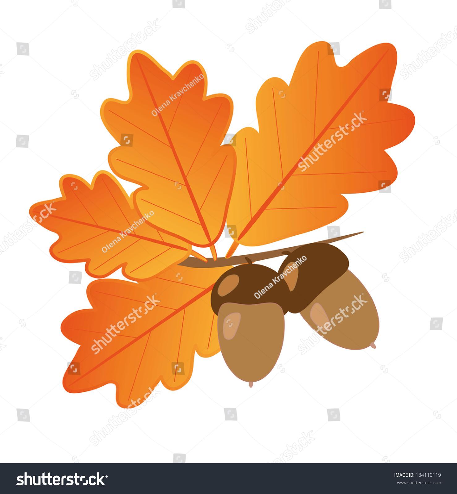acorns oak leaves stock vector 184110119 shutterstock