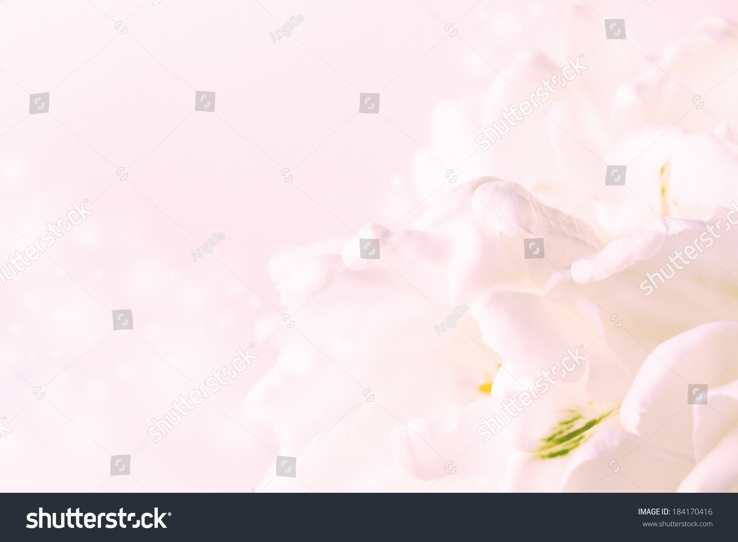 Light Pink Flowers Textured Canvas Background Stock ...