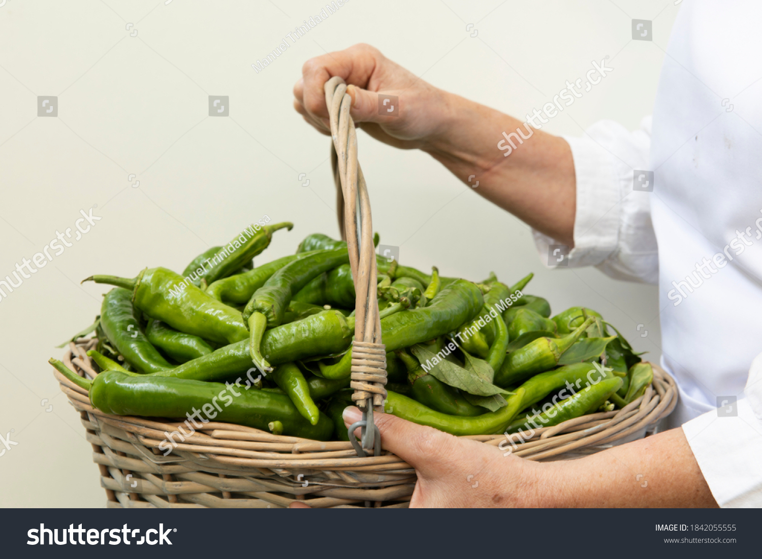 Woman's hands with a basket of green peppers, on white background