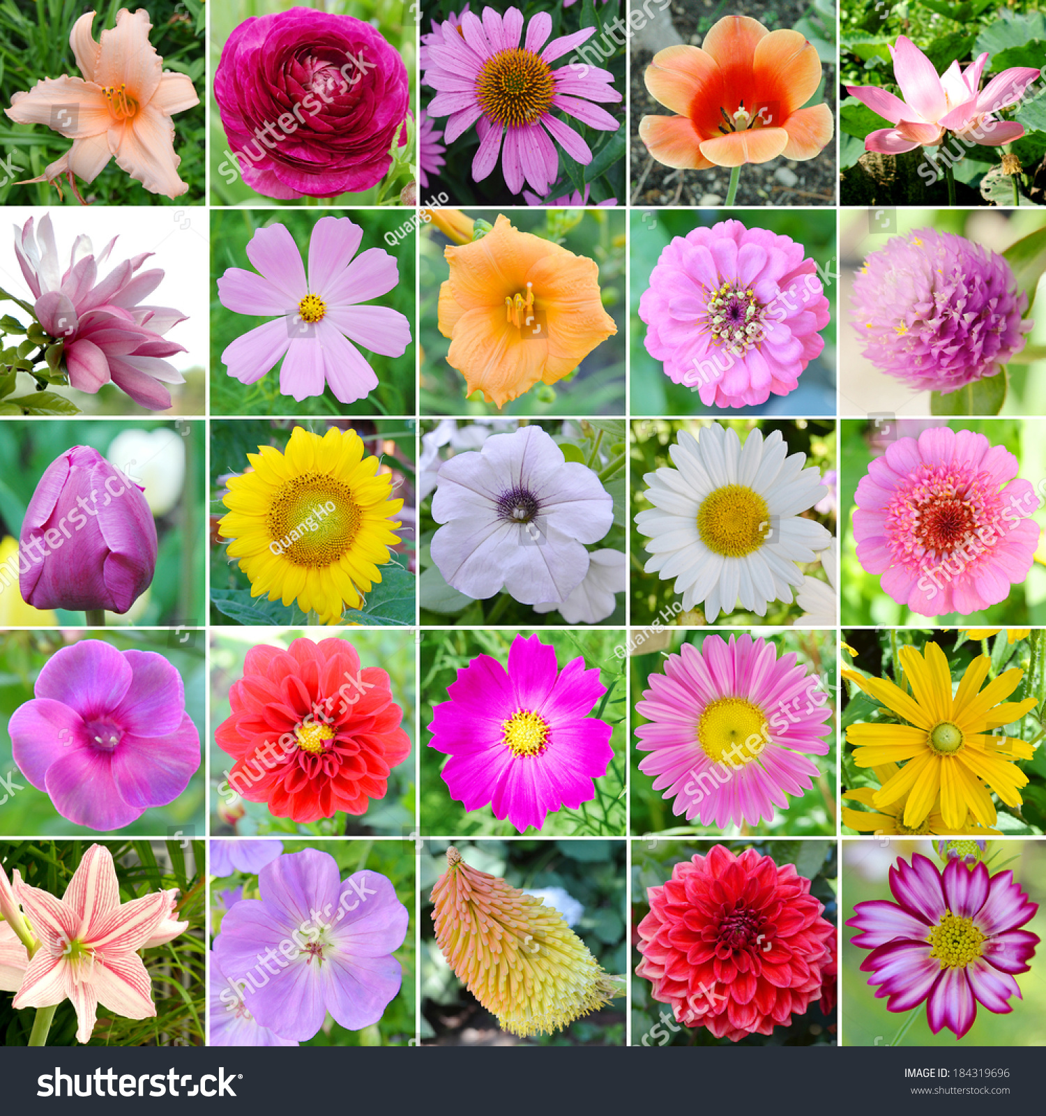Collage 25 different beautiful flowers stock photo royalty free collage from 25 different beautiful flowers izmirmasajfo