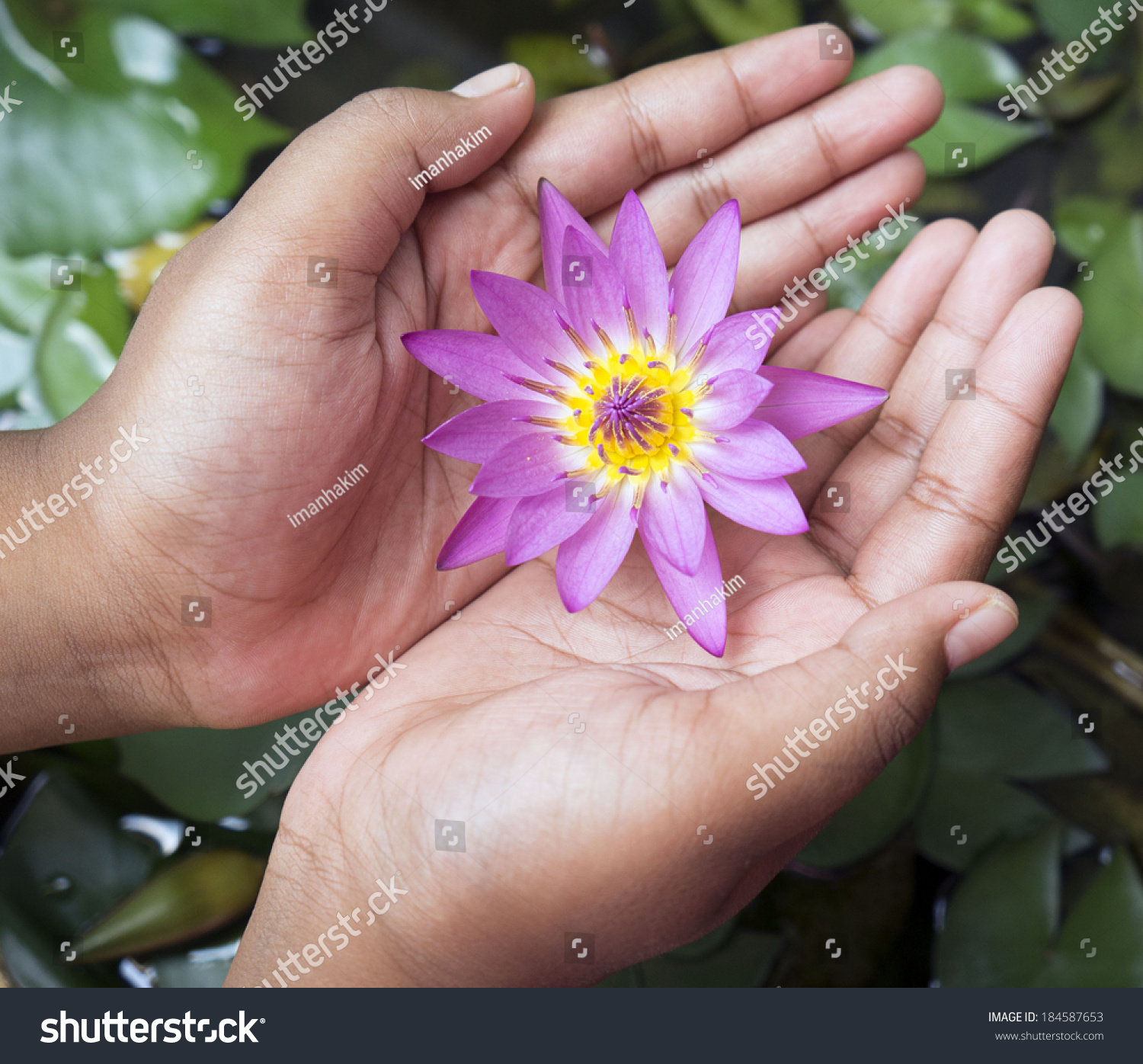 Hand Holding Lotus Flower Stock Photo Edit Now 184587653