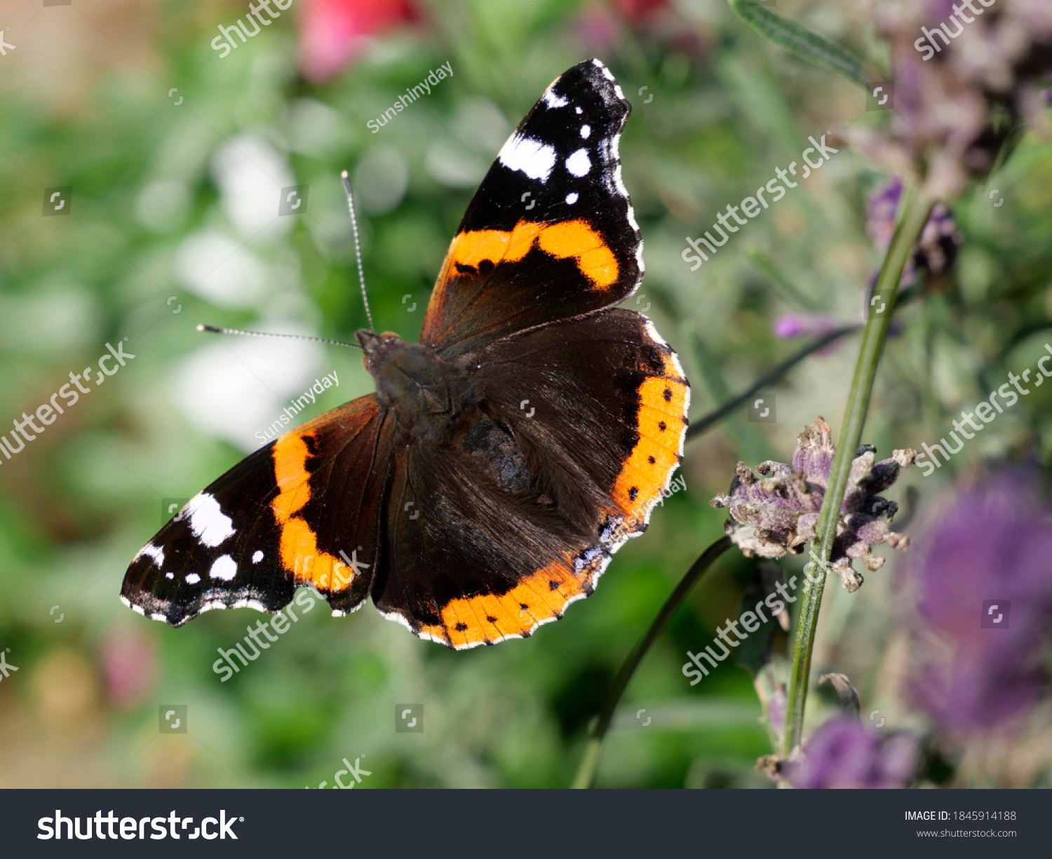 stock-photo-beautiful-butterfly-in-a-gar