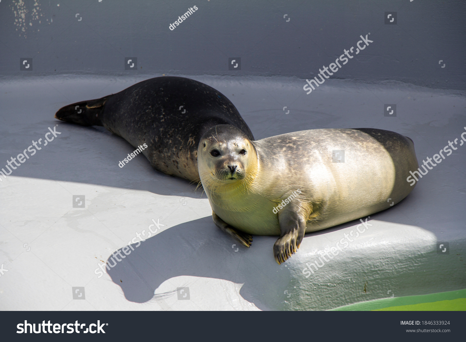 seal in rescue center in Texel the Netherlands