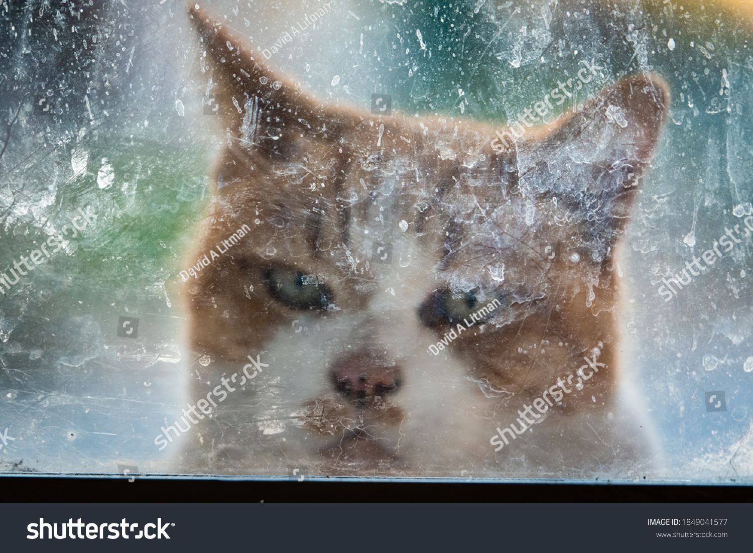 An orange cat looks through a foggy, scratched, dirty window, hoping to gain entry during the Covid19 pandemic crisis.