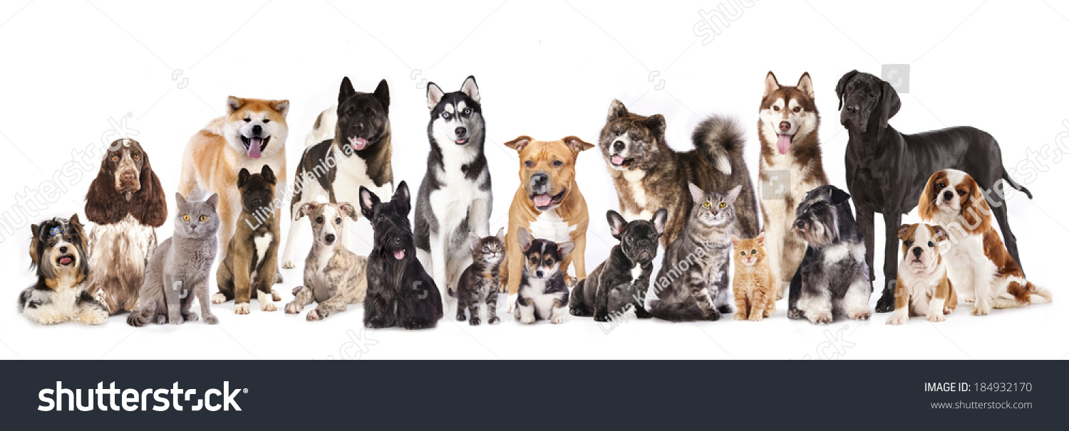 Group of dogs and cats - photo#25