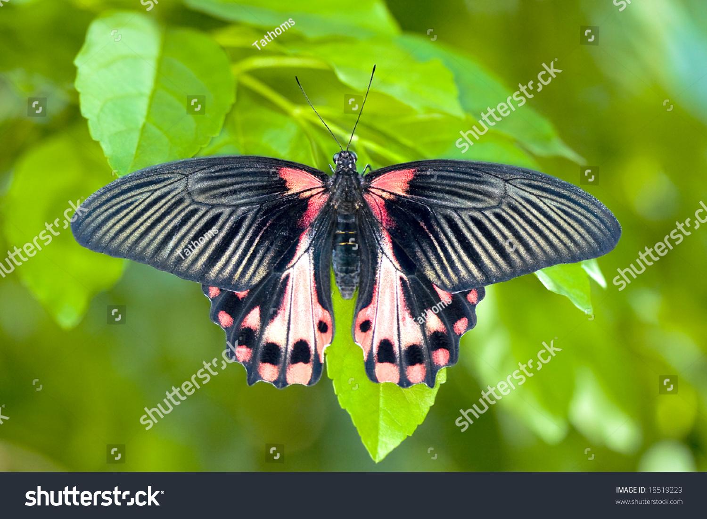 stock-photo-swallow-tale-18519229.jpg