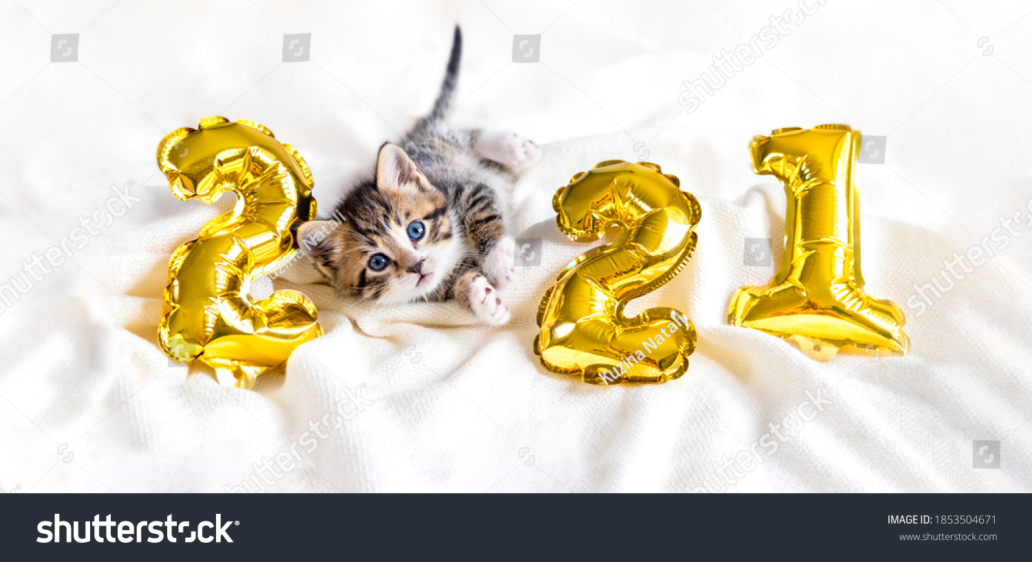 Christmas cat 2021. Kitty with gold foil balloons number 2021 new year. Striped kitten on Christmas festive white background.  #1853504671