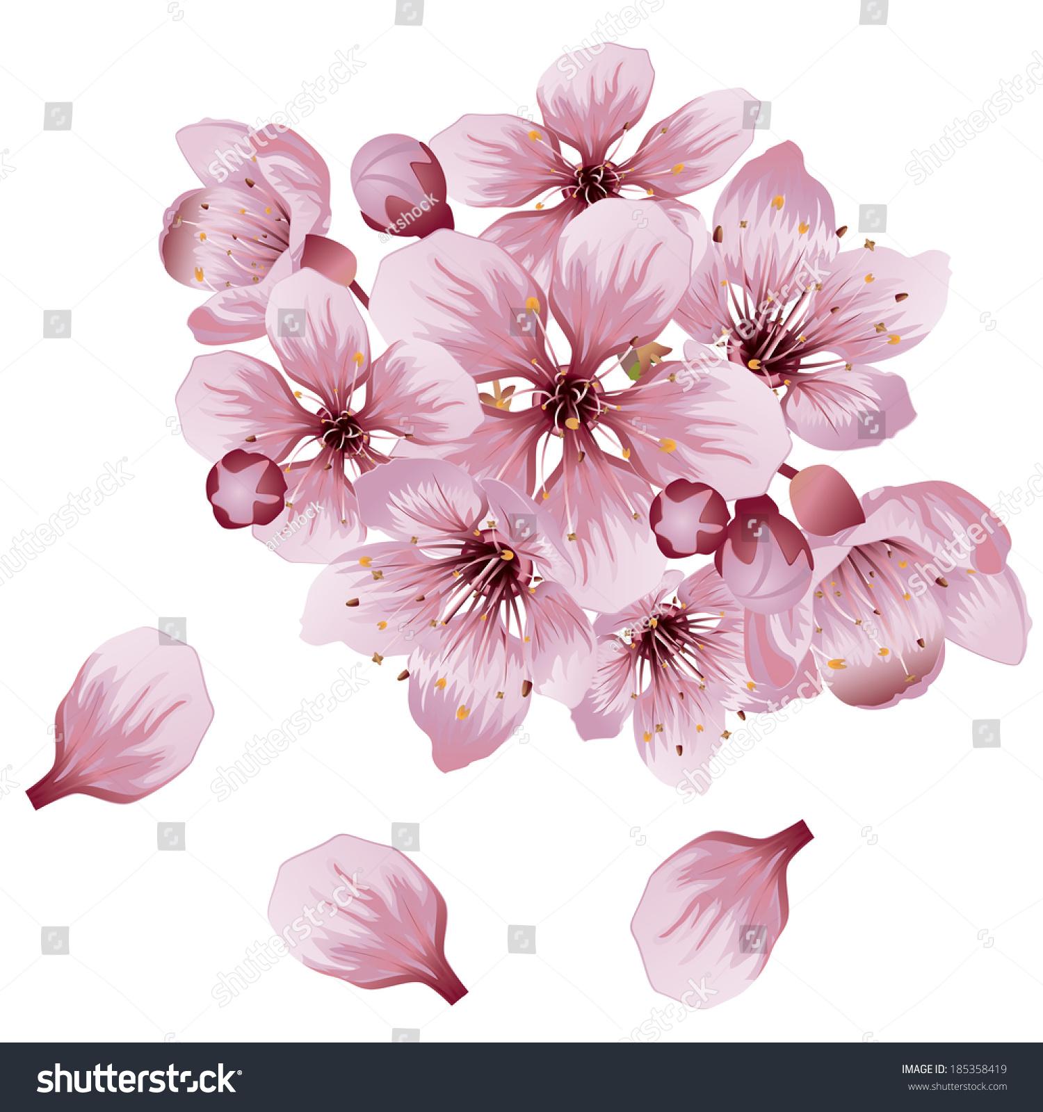 Pink cherry blossom sakura flowers on stock vector 185358419 pink cherry blossom sakura flowers on white background dhlflorist Images