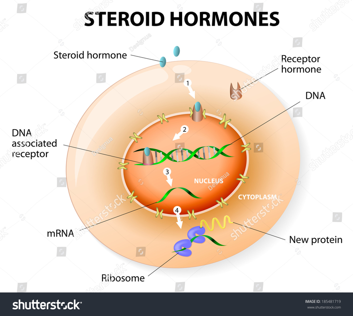 anabolic steroid cause cancer