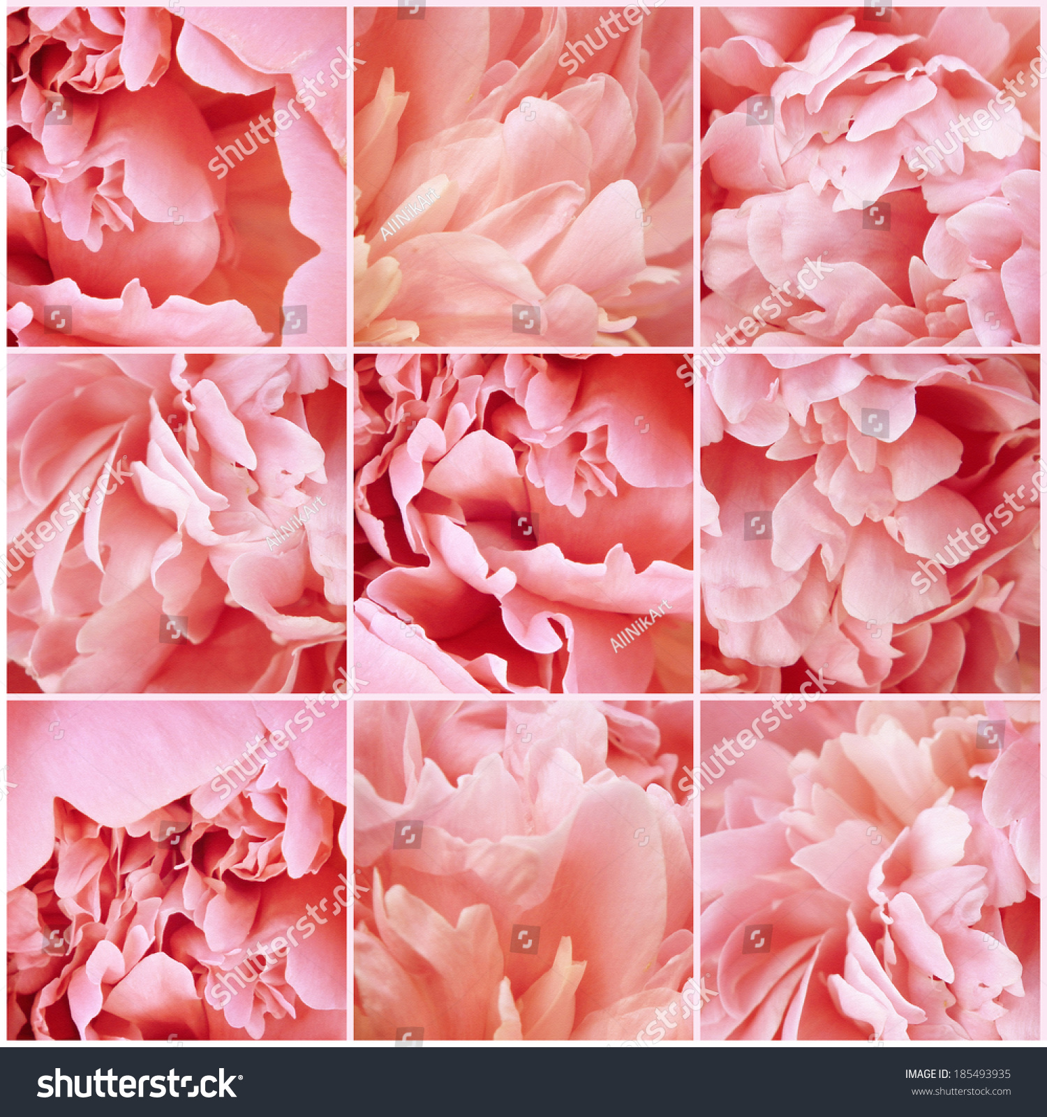 Vintage Collage Flowers Peony Pink Petals Stock Photo Royalty Free