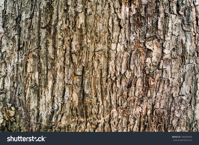 Tree Bark Texture Wallpaper Stock Photo 185694365