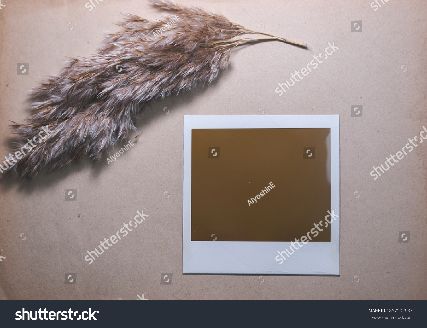 Blank photo frame with reed isolated on brown background as template for graphic designers cards, memories. Photo card with space for your logo or text.  #1857502687
