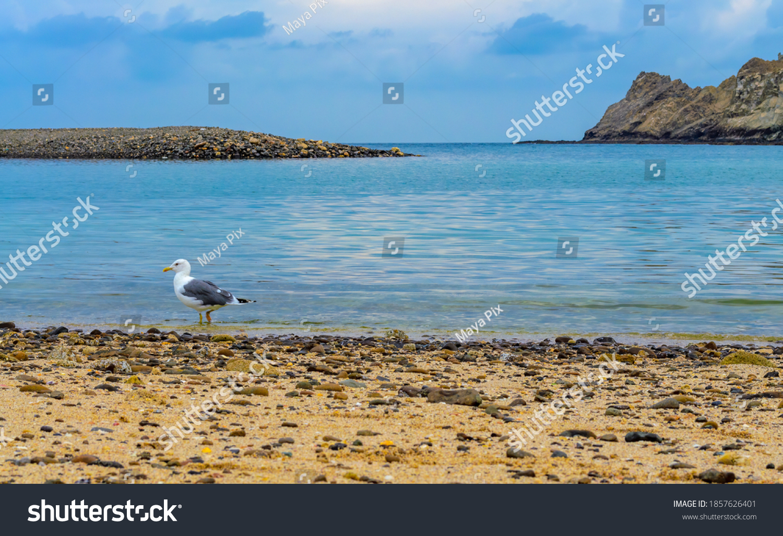 Seagull strolling on a beautiful beach in Muscat, Oman.