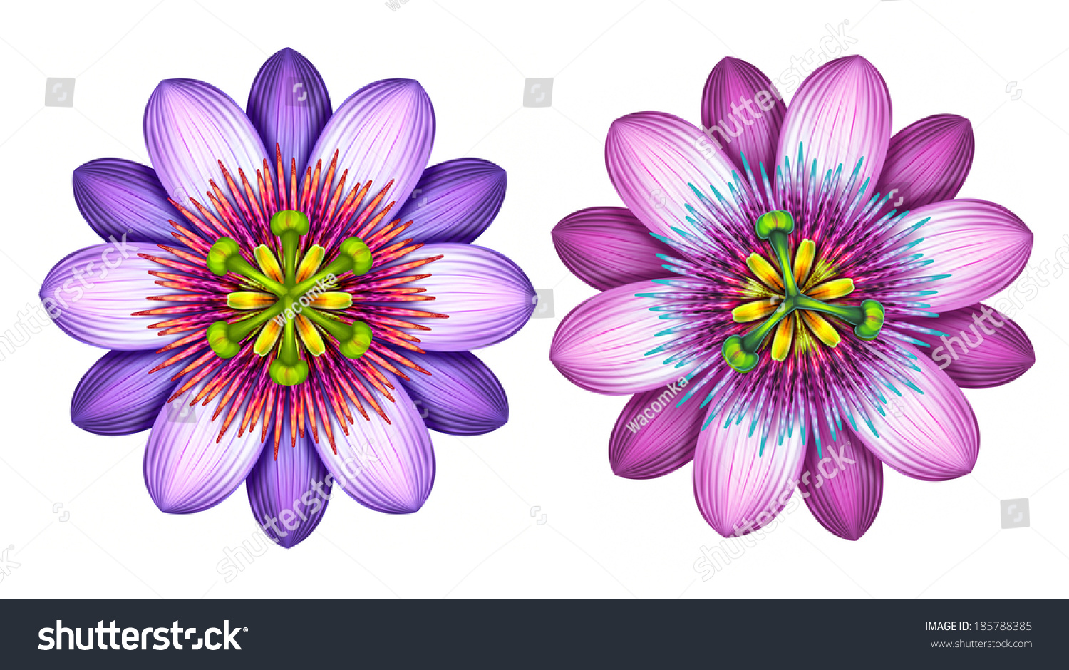 Passion Flower Line Drawing : Abstract exotic passion flowers clip art set graphic