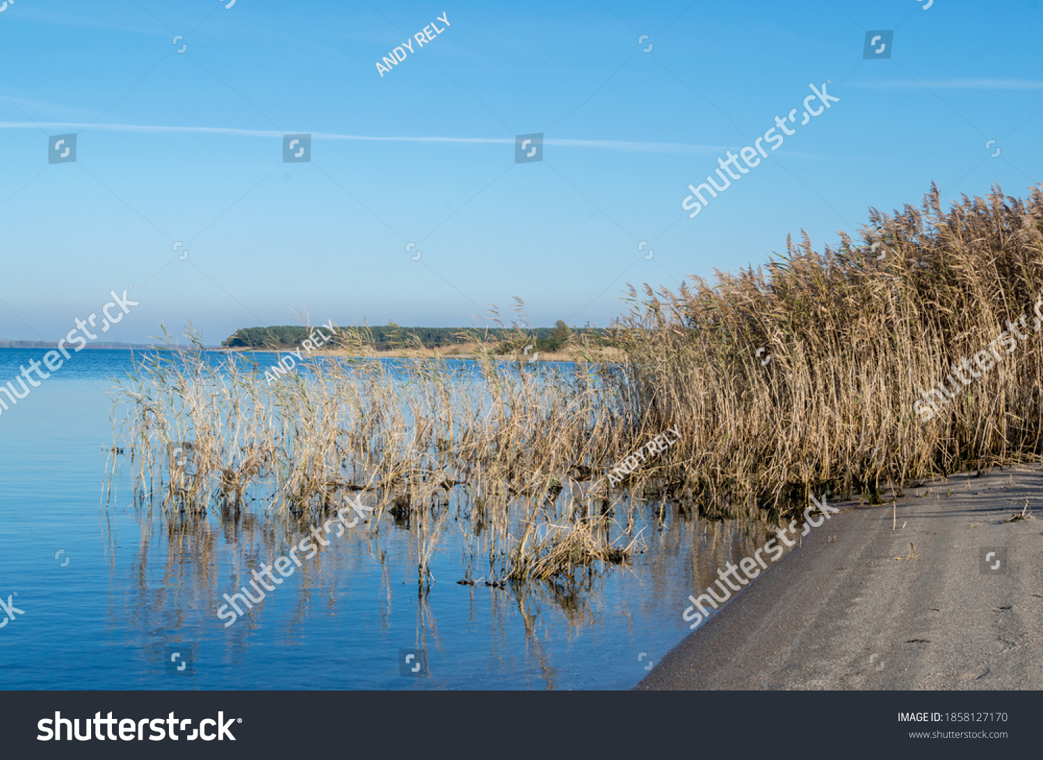 Landscape of sandy beach by calm water of blue lake, surrounded by autumn dry yellow reeds, reflected in water surface against sky with white plane track and  distant strip of green forest.