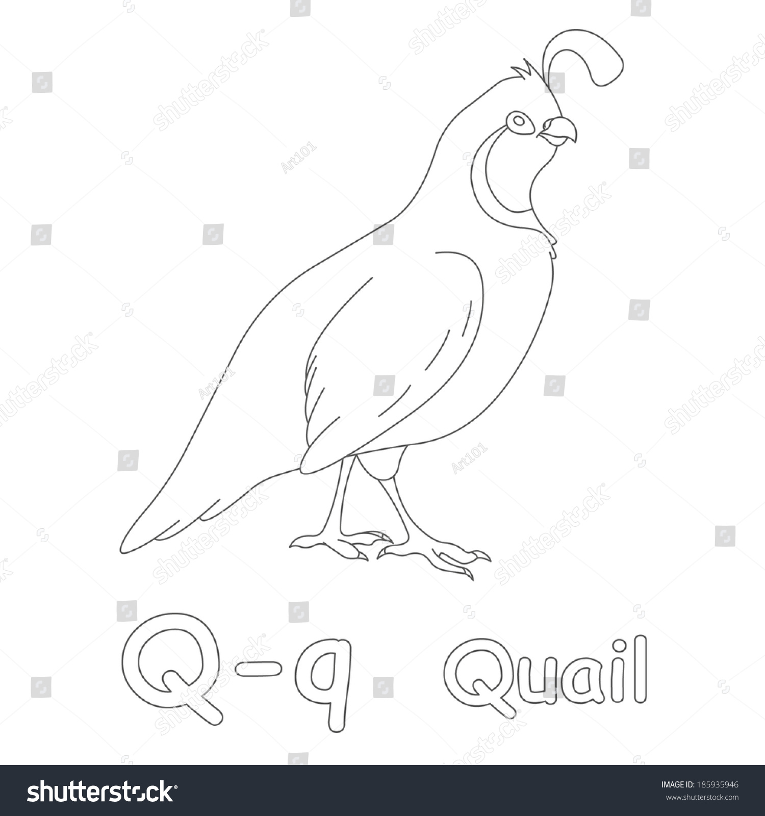 Q Quail Coloring Page Stock Illustration 185935946 - Shutterstock