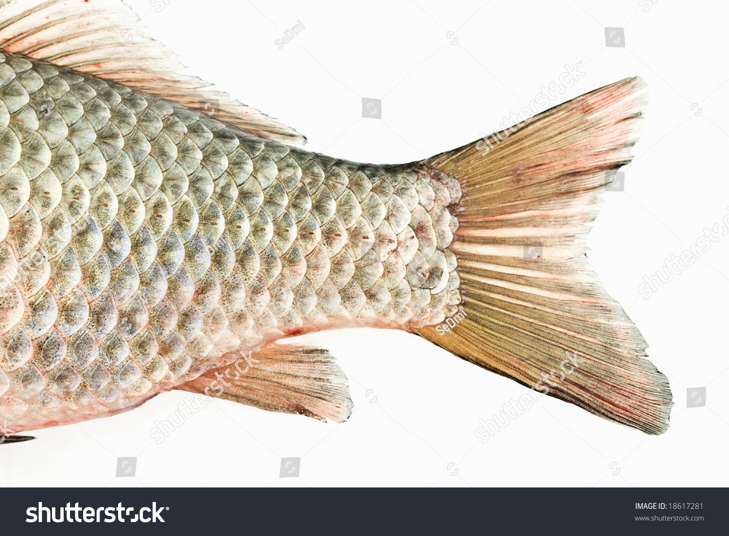 Fish tail stock photo 18617281 shutterstock for Fish and tails