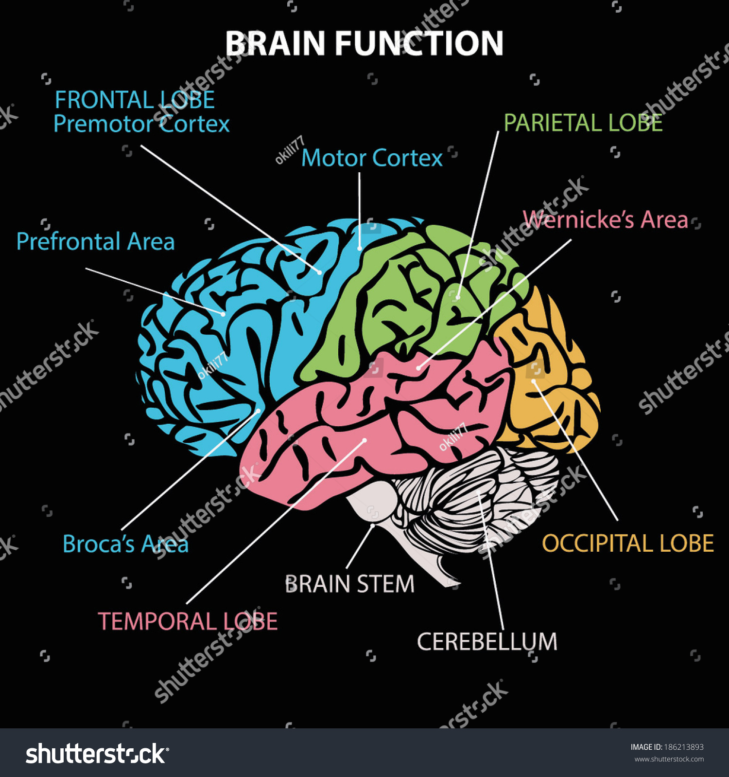 Brain diagram stock vector 186213893 shutterstock brain diagram ccuart Image collections