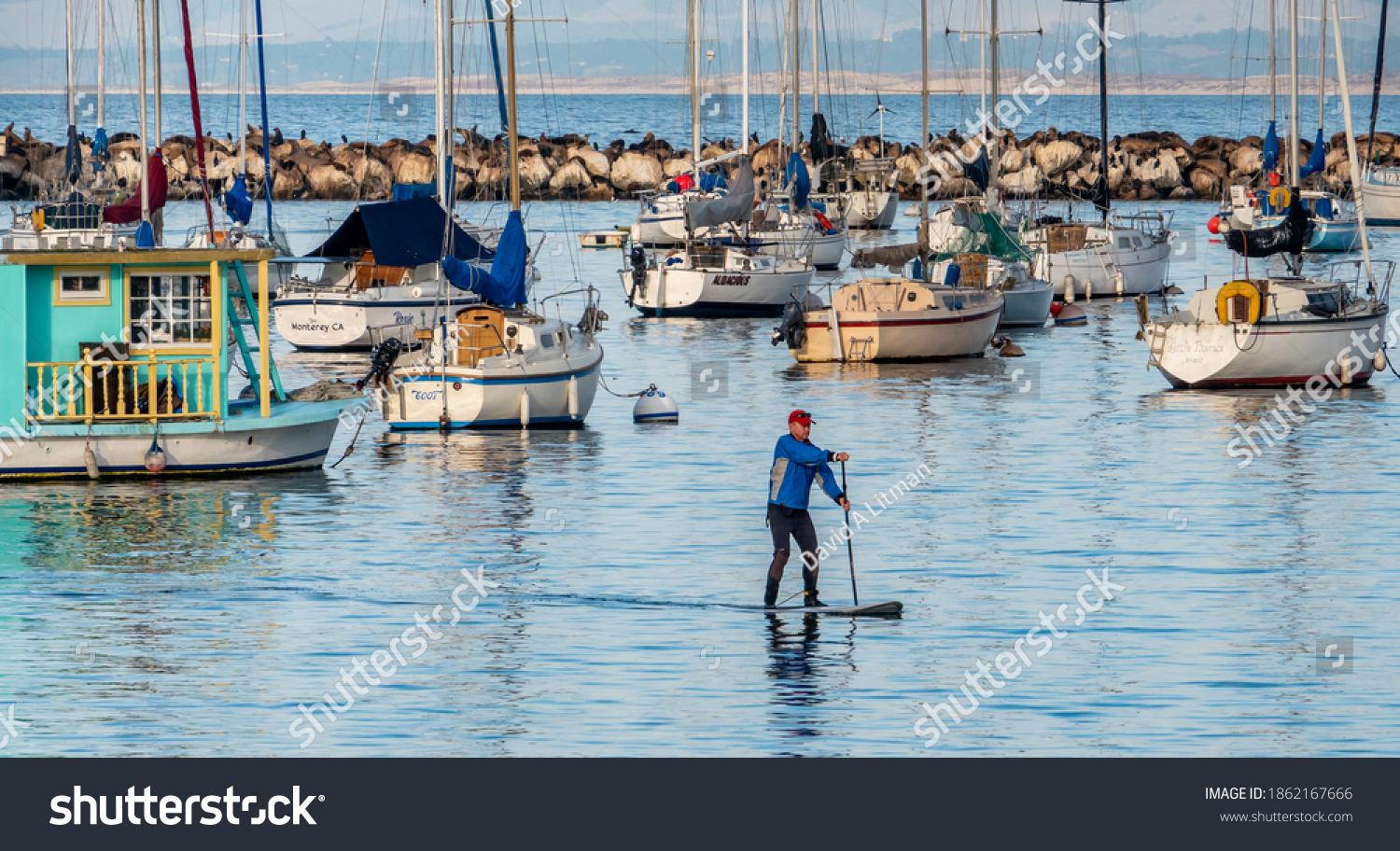 Monterey, California - November 21, 2020: A man paddles his paddleboard across the Monterey Harbor and Marina, with moored sailboats, a breakwall  with sea lions and a single dolphin in background.
